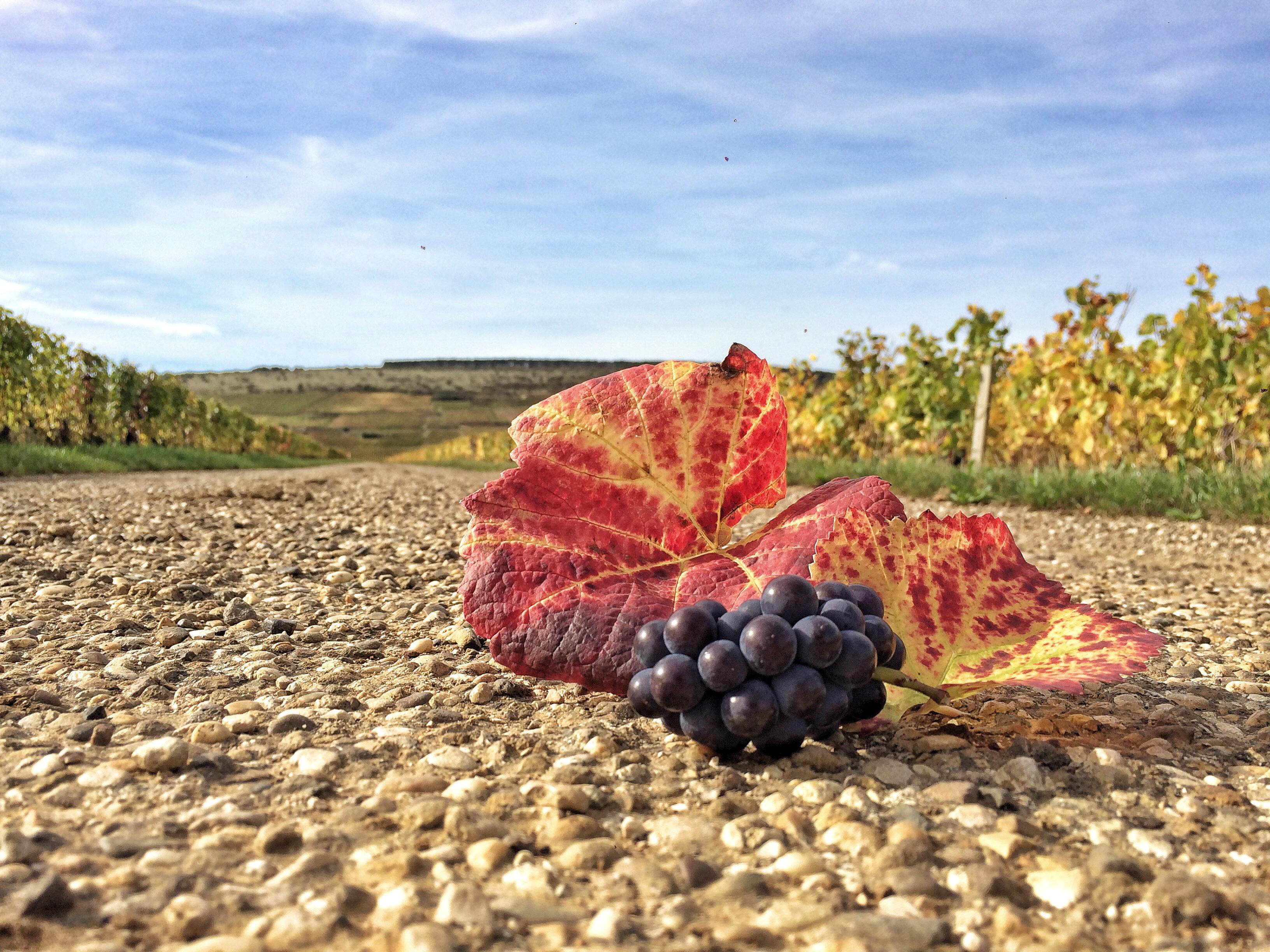 Bourgogne Automne - Mylene Fargeot oct 2017 (40)