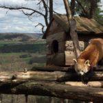 Auvergne > Parc animalier Ardes-sur-Couze